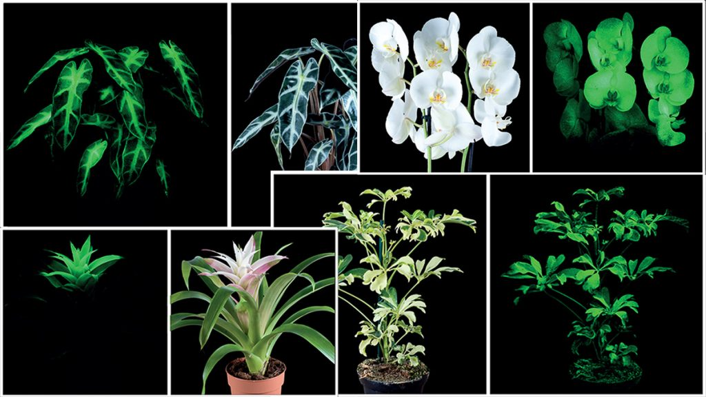 flAVATAR plants