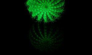 flAVATAR cactus glow in the dark