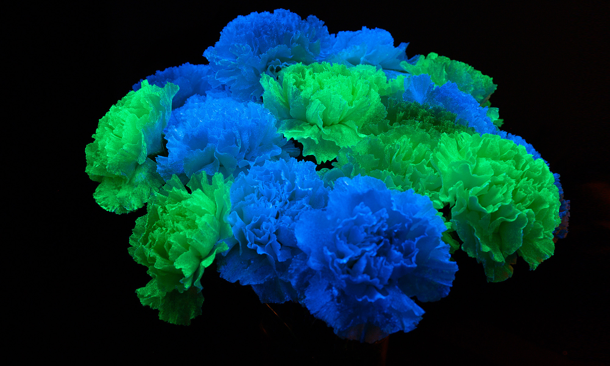 flAVATAR carnation glow in the dark