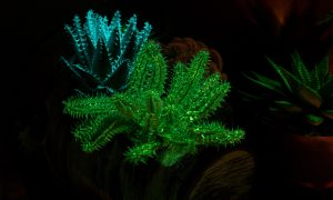 flAVATAR flowers glow in the dark